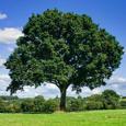 The Catalyst Tree